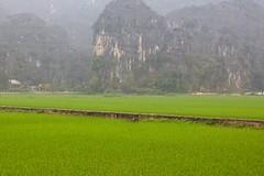 Baie d'Ha Long Terrestre - Ninh Binh - Hoa Lu - 25