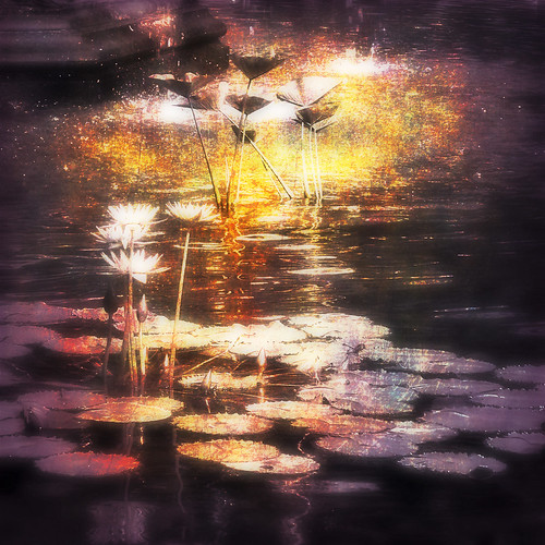 dream of lillies