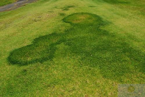 turfgrass mystery