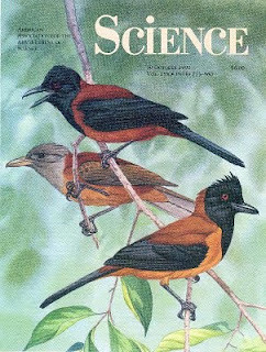hooded-pitohui-science-1993-cover
