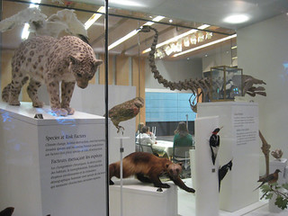 Taxidermy animals in ROM Life in Crisis: Schard Gallery of Biodiversity