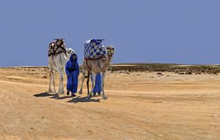 Sur les pistes du désert