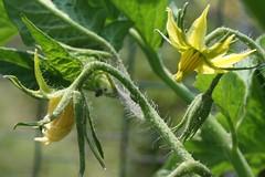 garden flower 029