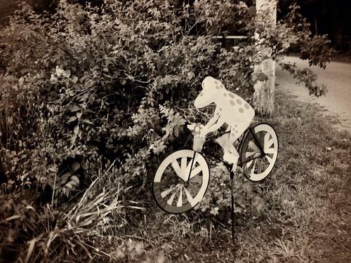 Melinda's Cycling Frog, Dirigo Dynamo