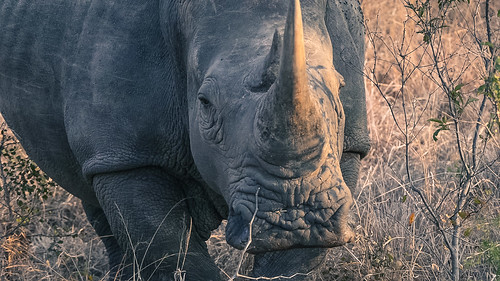 Rhino and the Sun