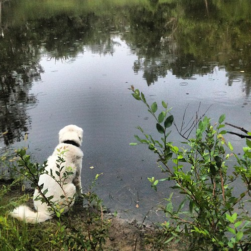 Shiloh at the pond