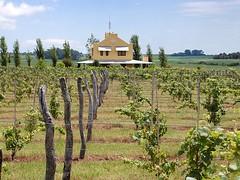 La Expo Victoria comienza enseñando a hacer vino