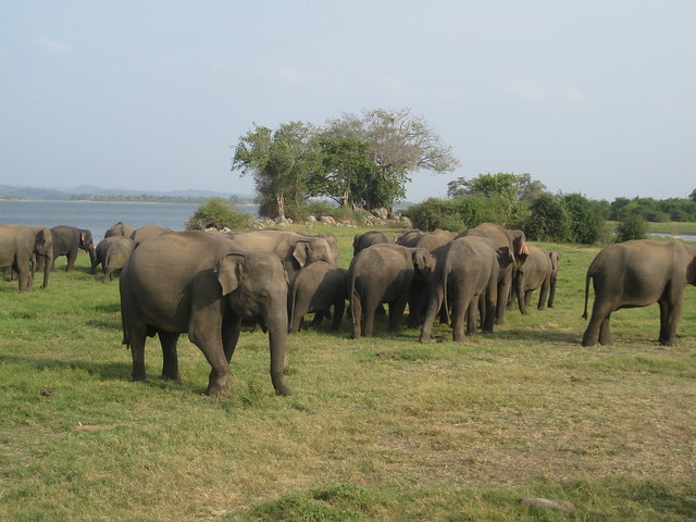 photo: www.flickr.com/photos/shankaronline/7568356730