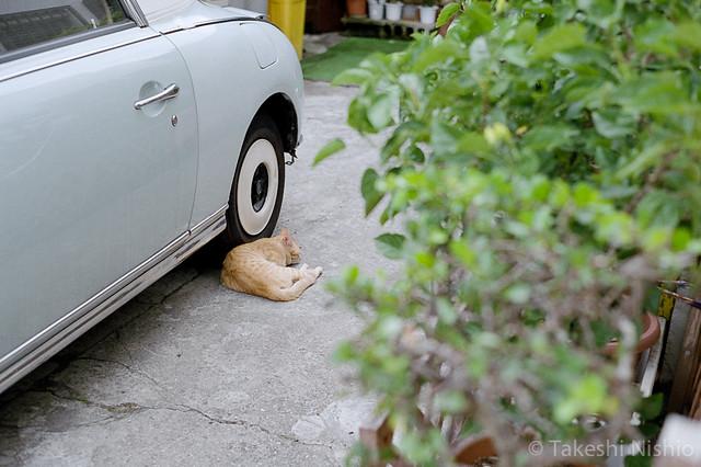 車の横で寝ている / Sleeping by car side
