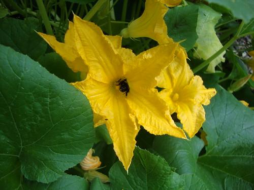 bumblebee doing his/her job