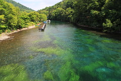 River of green / 緑の川