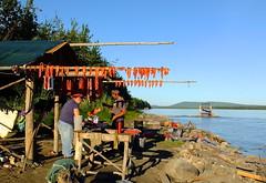 Cutting Fish on the Yukon