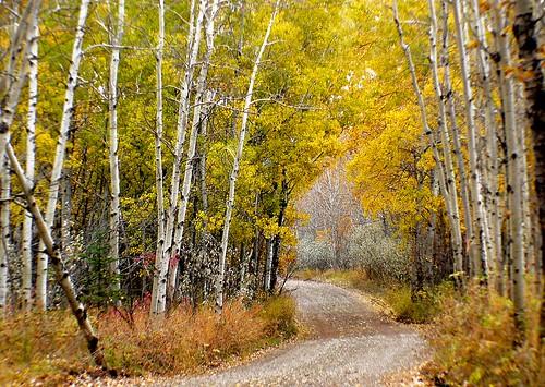 Autumn Calgary Alberta (12)