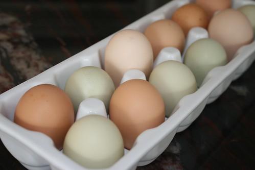 fresh eggs IMG_7005