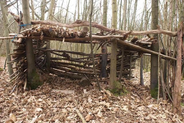 DSC_8234 woodland shelter