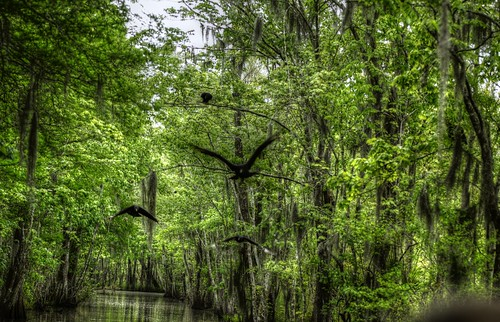 new orleans louisiana tour south vultures swamp houma munsons