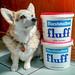 Corgi Fluff