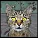 Miau! - Meow! 04 by Daniel Mennerich