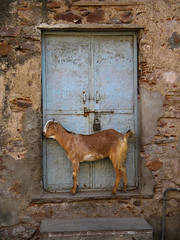 let me in... (Bundi, India) by albatz