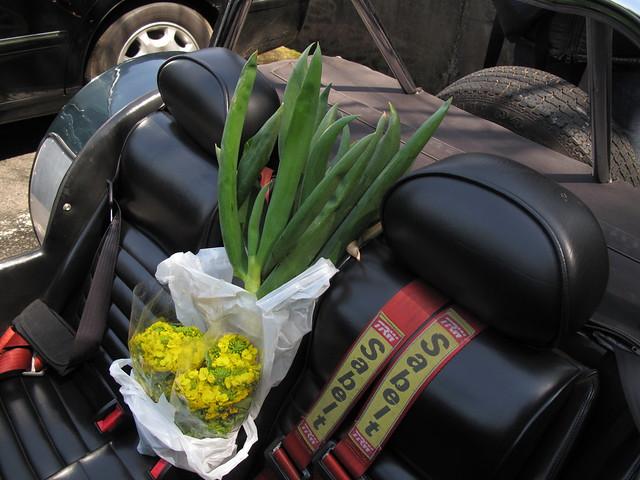 菜の花とねぎ