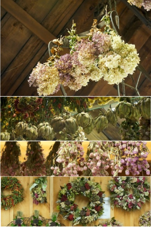 dried flower colllage