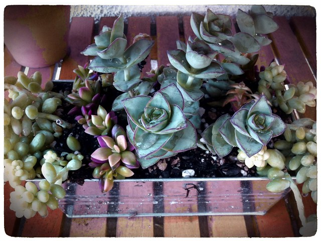 DIY: Succulents In Galvanized
