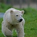 Siku  - ein Star hält Hof im Skandinavisk Dyrepark in Kolind