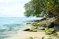 Barbados-2MY_2864