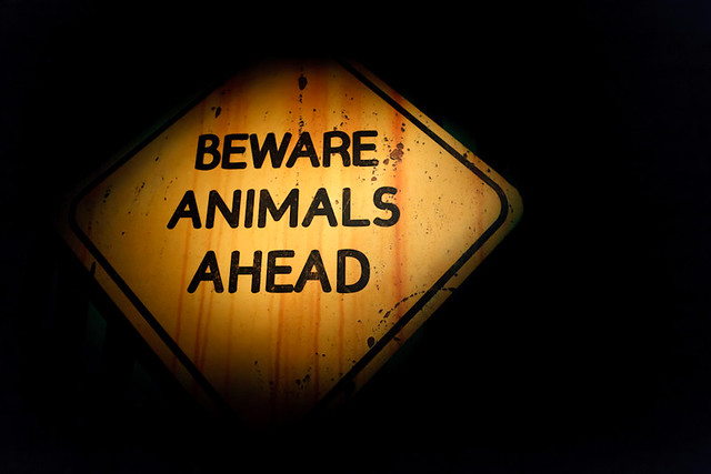 Z aparatem wśród zwierząt