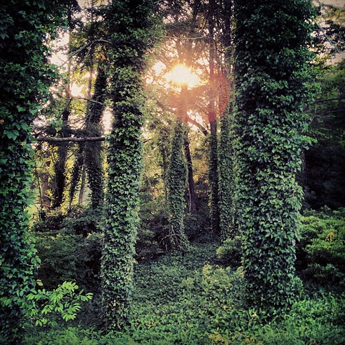 trees sunset summer vacation color green square photography vines capecod dream squareformat memory sutro iphone iphoneography stephensheffield ostetville