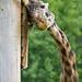 Zoo June 15