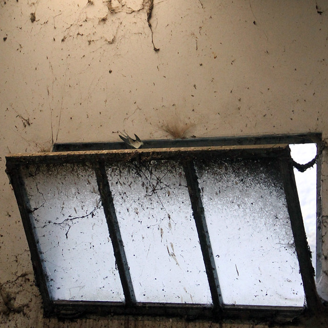 SWALLOW EMERGENCY WINDOW
