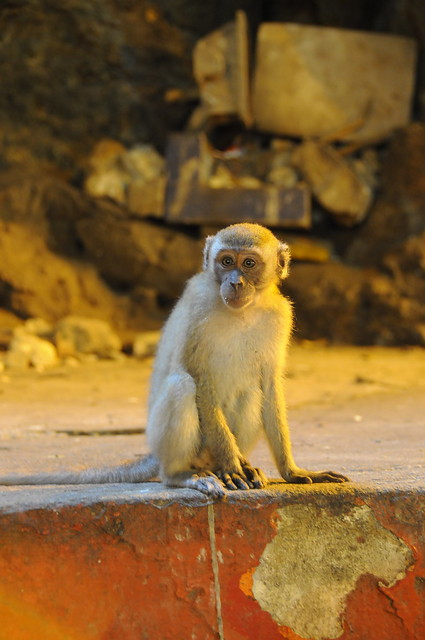 Mono tranquilo