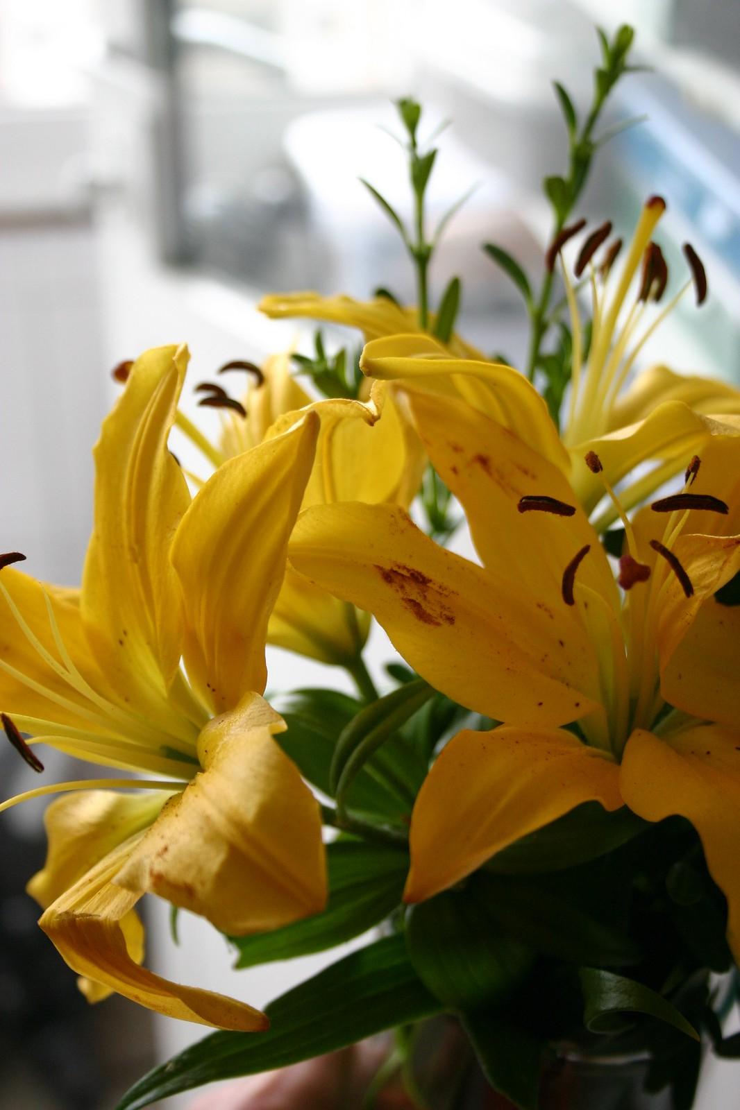 flores_8_20120620