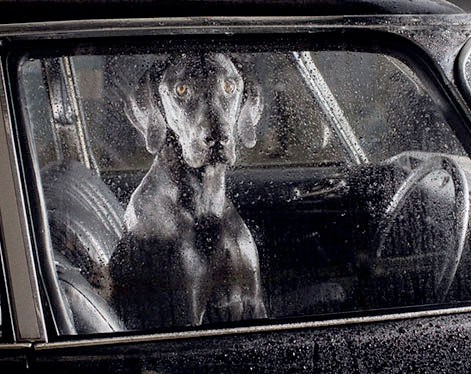 DOGS IN CARS by MARTIN USBORNE