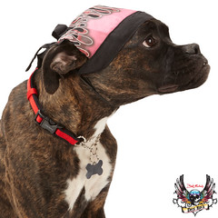 bret michaels dog pink bandana