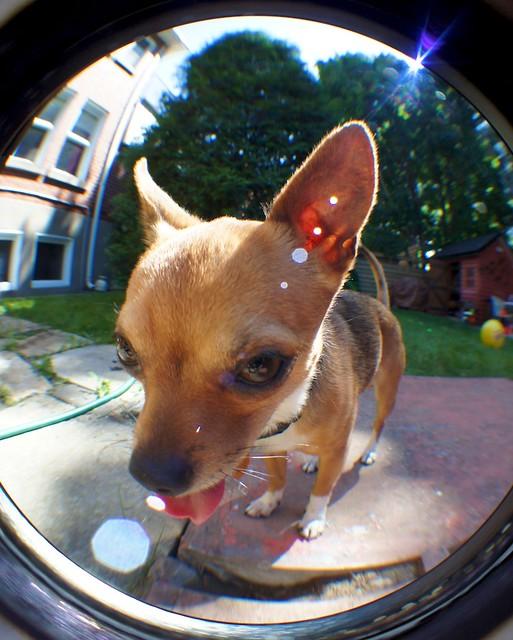 anteketborka.blogspot.com, mio11