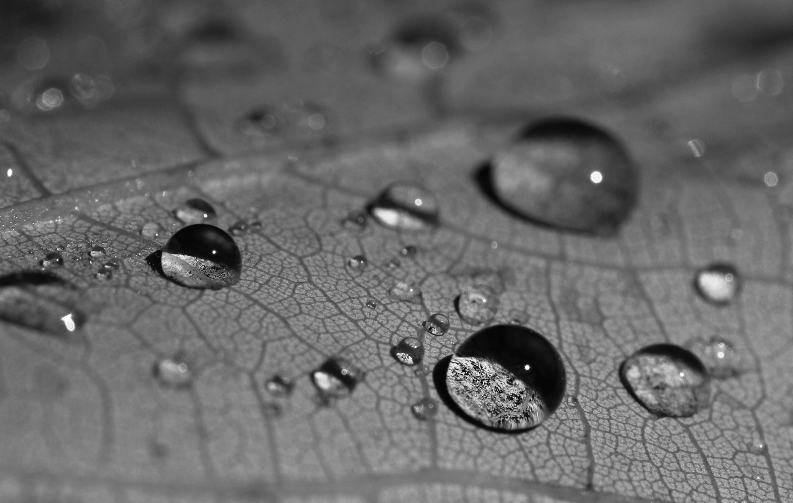 Droplet Domes