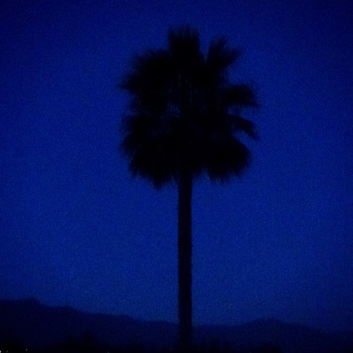 Goodnight palm tree.