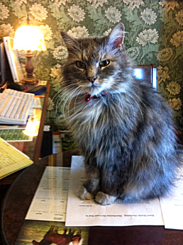 cat at Nagle Warren Mansion - Bed & Breakfast in Cheyenne, Wyoming