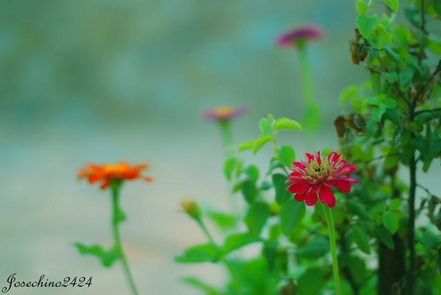 Juego de flores