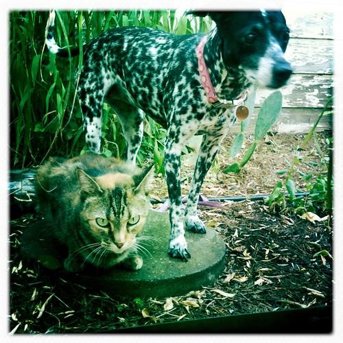Jungle pets