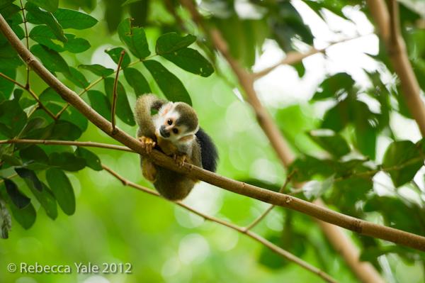 RYALE_Costa Rica_6
