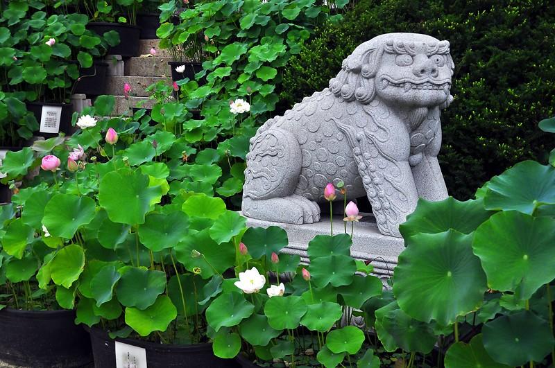 Lion Statue -- Bongwonsa Temple -- Seoul
