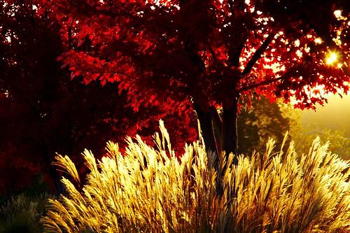 autumn fall leaves sunrise