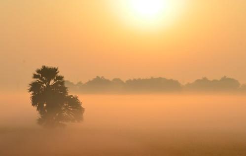 travel mist beautiful misty fog landscape highresolution nikon tour artistic kitlens dreamy nophotoshop bengal unedited westbengal bihar d5100 kishangunj