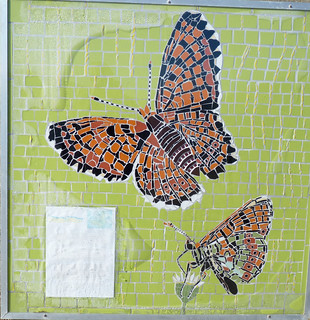 Glanville Fritillary mosaic Bonchurch Isle of Wight