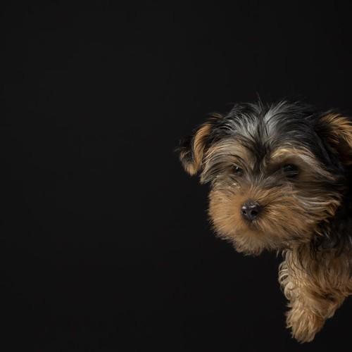 Dogs Trust - Zuka