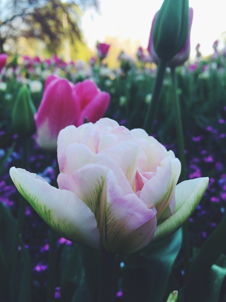 When Flower Blooms So Does Hope Beauty Flowers Quotes