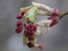 土, 2012-03-17 13:20 -  Brooklyn Botanic Garden 2012.03.17